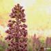 Macro Flower_00244