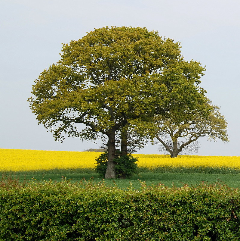 A Family Treeo Branching Out Into a Field of Gold!