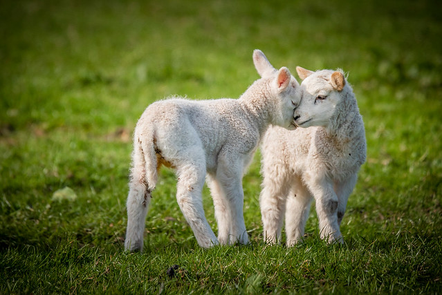 New born siblings
