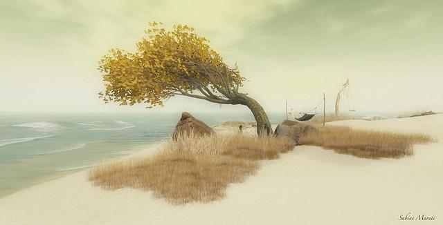 amrum beach scene