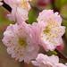 Macro Flower_00248