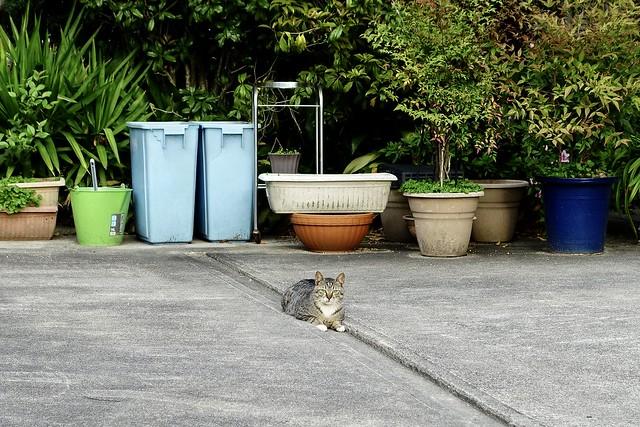 Today's Cat@2021−04−06