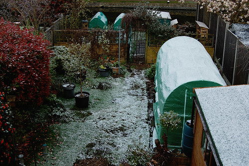 Looking Down on the Back Garden - April 2021