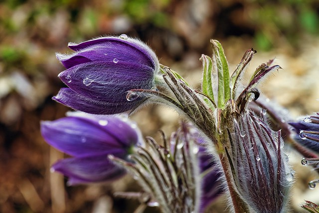 Nature outdoor spring flora 06.04.2021 10-59-27
