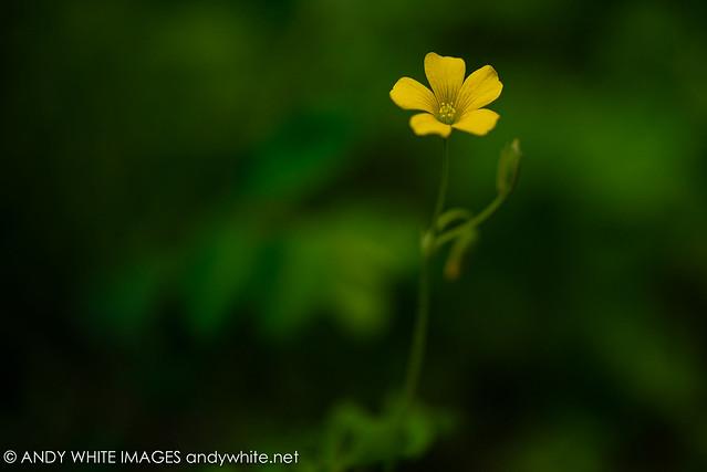 flower20210406-1