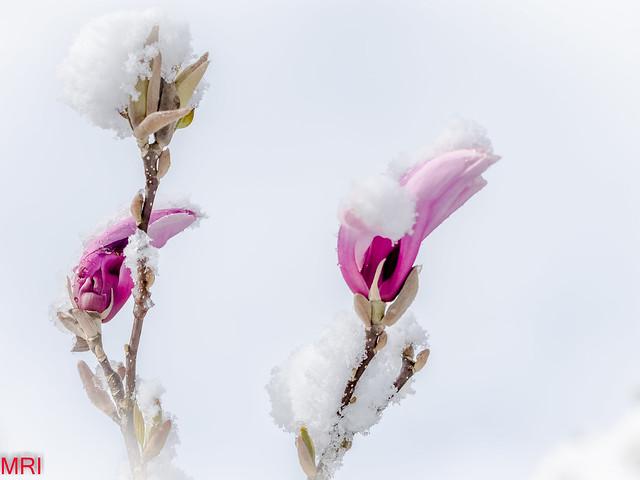 Un printemps capricieux