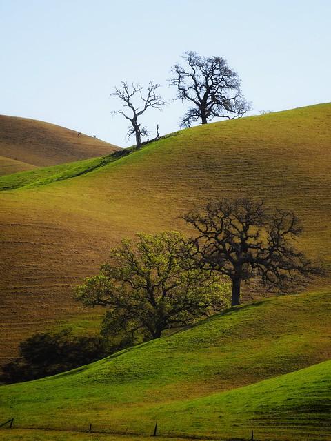 Rural California in Spring