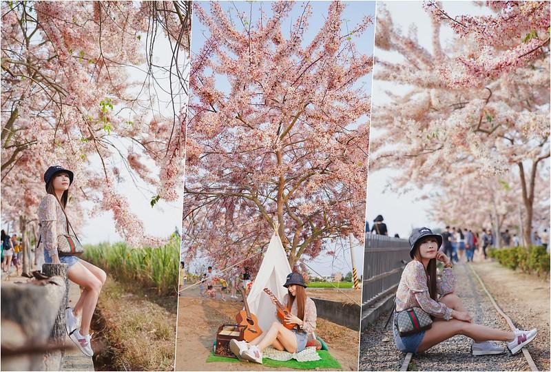 【台南景點】花旗木、波斯菊、向日葵三種花海一次滿足!拍到手軟也不嫌累的景致都在這~
