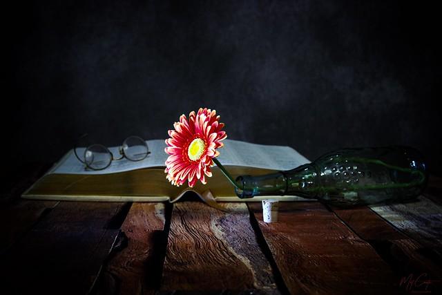 Gerbera daisy IMG_7489-1