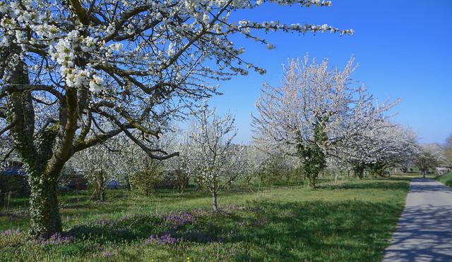 Easter Sunday walk to the Kaiserstuhl