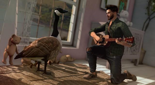 #41 A Goose's Ballard