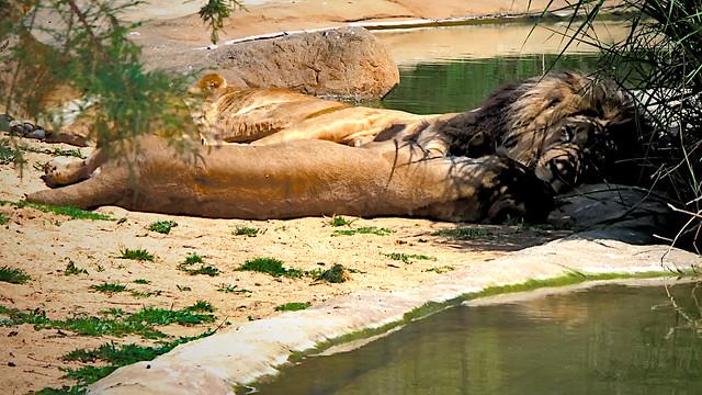 La siesta del Rey