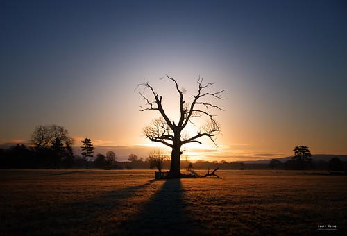 Good Moring Tree