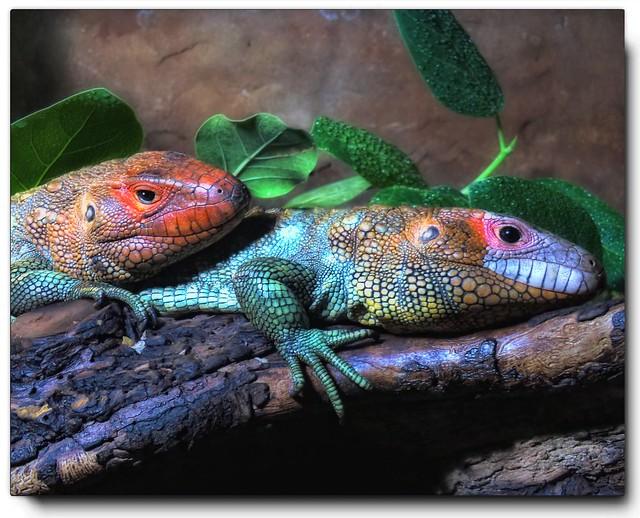 Lounge Lizards.............