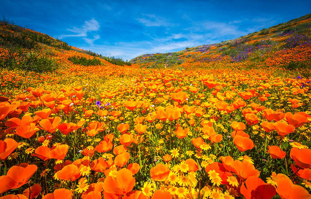 Antelope Valley Poppy Reserve California Superbloom Poppies Desert Wildflowers Elliot McGucken Fine Art Landscape Nature Photography! Master Fine Art Photographer!  Wild Flowers Super Bloom!