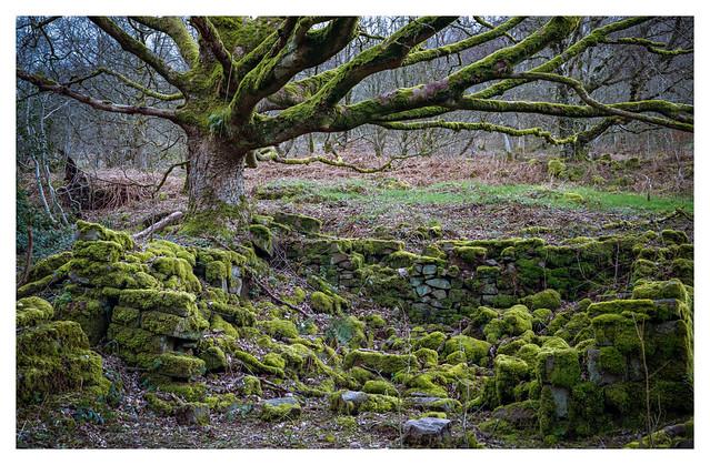 Mossy ruin