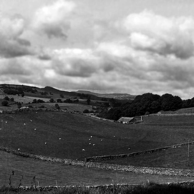 Sheep farm near Settle