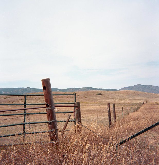 The Dry Grass (DUAFLEX05-825)