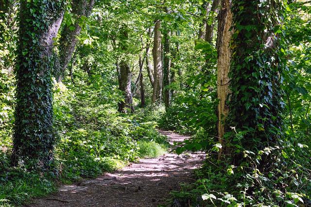 Hidden Pathways