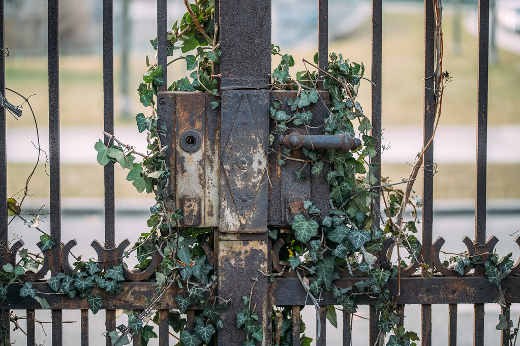 Cemetery gate overgrown with ivy
