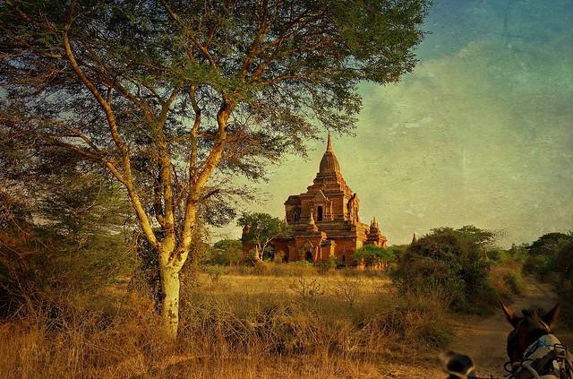 MYANMAR, Burma - Old-Bagan, mit der Pferdekutsche durch das weitläufige Ruinenfeld mit zahlreichen Tempeln und Sakralgebäuden der  historischen Stätten... with the horse-drawn carriage through the extensive field of ruins   ... 78273/13551