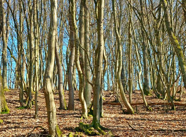 Eichen-Hainbuchen-Wald