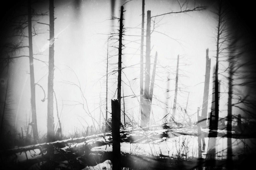 Broken as a tree