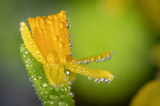 Waterdrops on a colorful blossom