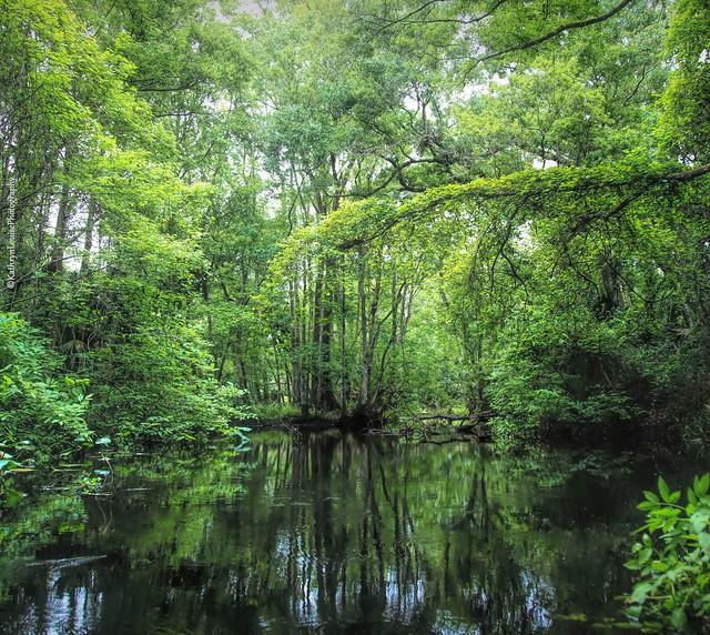 Paradise is just a paddle away.                                             Kayaking Blackwater creek 💕Explored