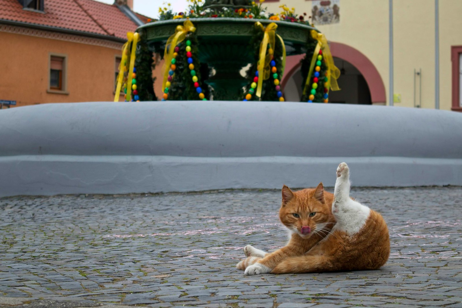 Katze vor dem Osterbrunnen in Schwabenheim an der Selz