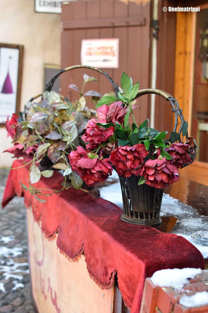 Kukkia pakkasessa Tallinnassa
