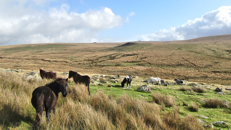 Hart Tor and South Hessary Tor behind
