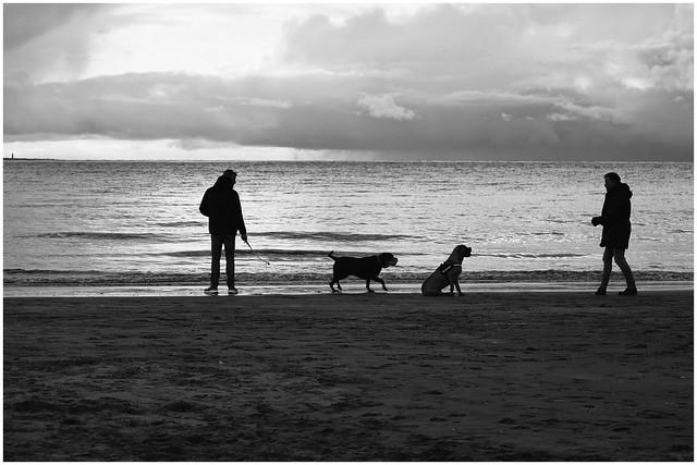 The dog whisperer....Explored)