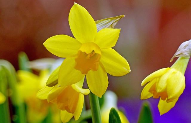 001  Spring Flower's