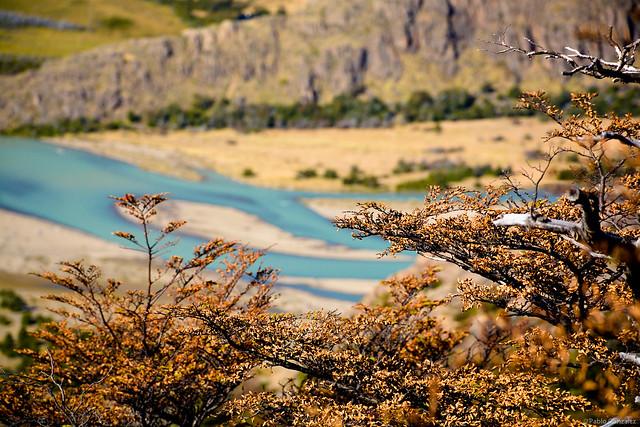 Lengas en otoño. El Chaltén, Patagonia Argentina.