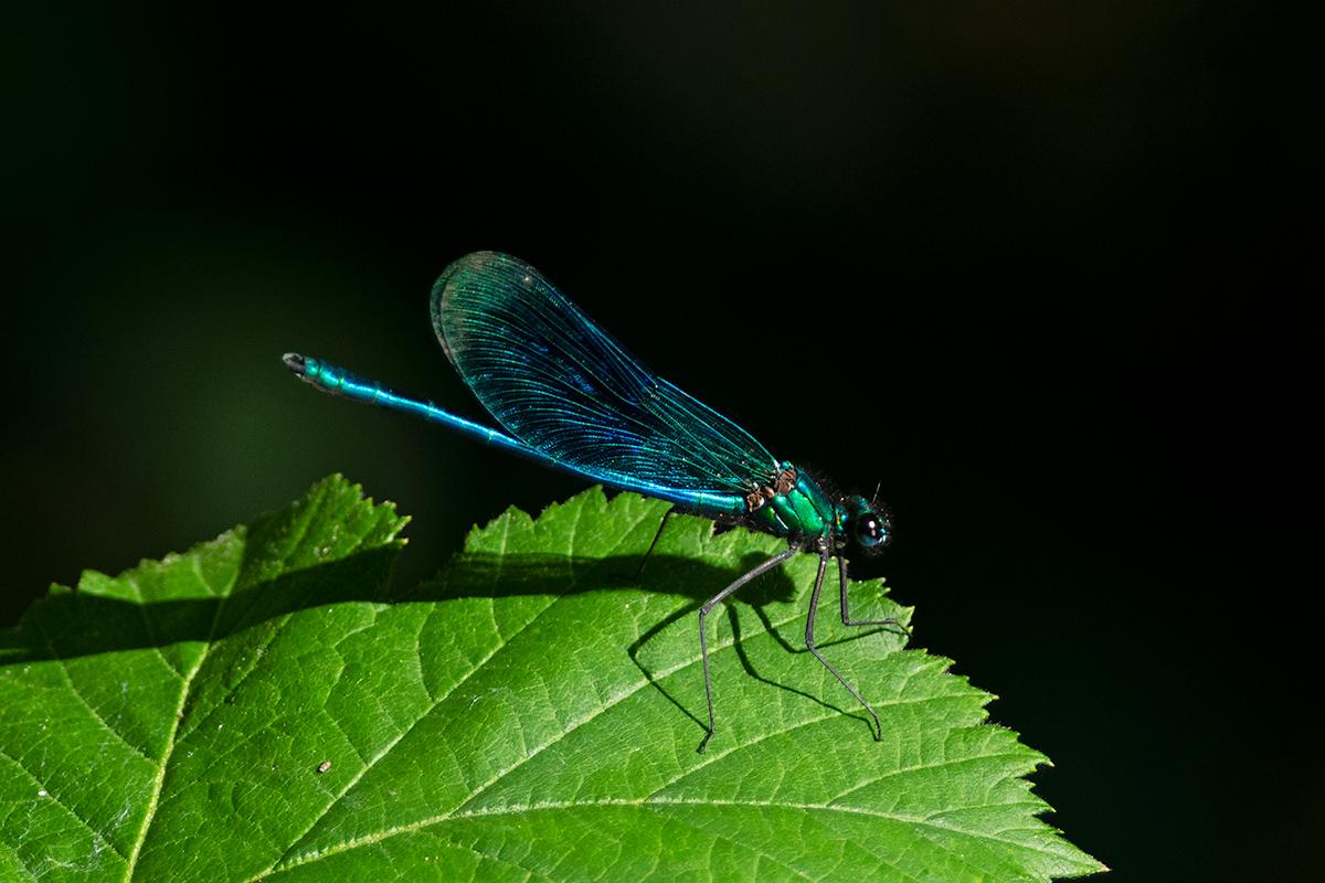 Macros/  proxi/  insectes  - Page 19 51101612112_c9f3405729_o