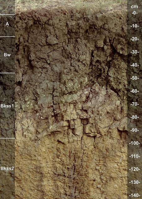 Huston Black soil series (Texas State Soil)
