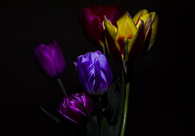 light painting tulips 3