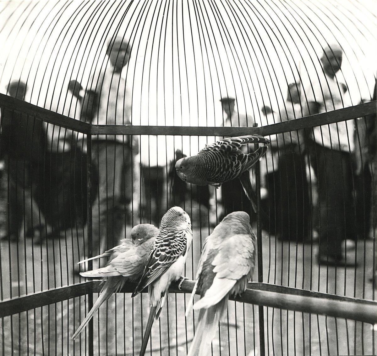 1960. Птичий рынок
