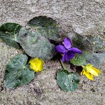 Flowers on concrete: incompatible, unique and extraordinarily stylish