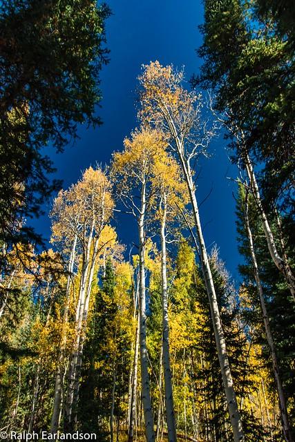 Aspens Framed in Fall Colors