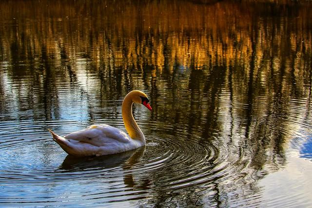 Golden harmony 💕