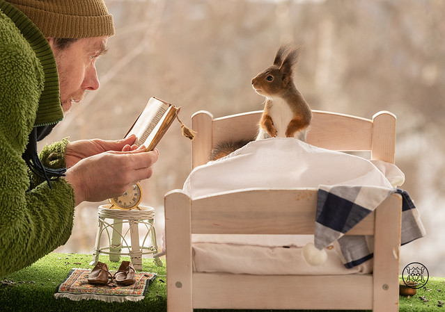 Red Squirrels on a bed man holding a book