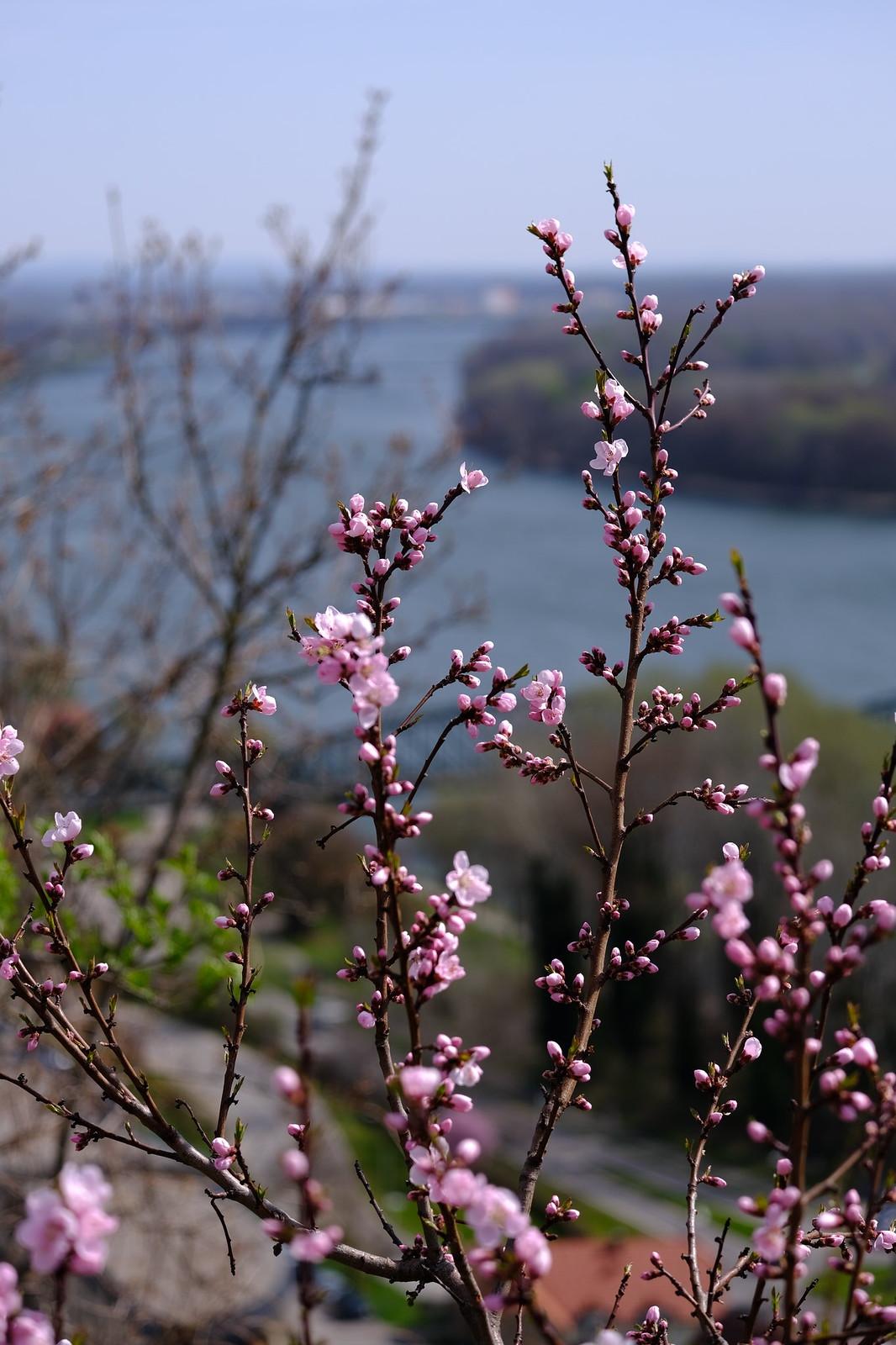 Blik over de Donau