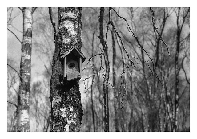 Broken bird-box