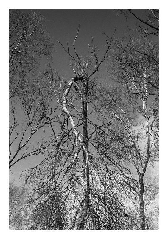 Creaky tree