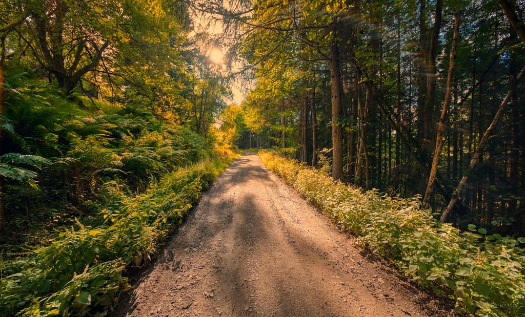 Path through the woods near Bridge of Cally, Scotland.