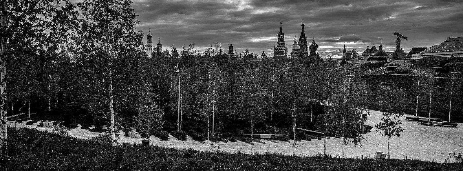 Лес в парке «Зарядье»