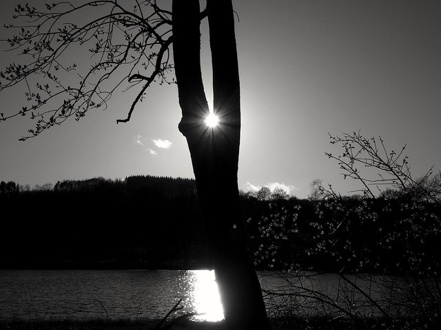 when the sun rests in the tree