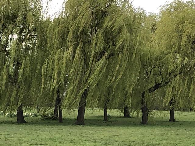green (97/365)